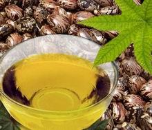 Castor Oil Processing