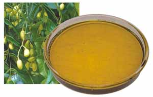Extraction of Neem Oil