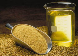 soya bean seed oil manufacturing process