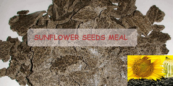 sunflower oil seeds meal